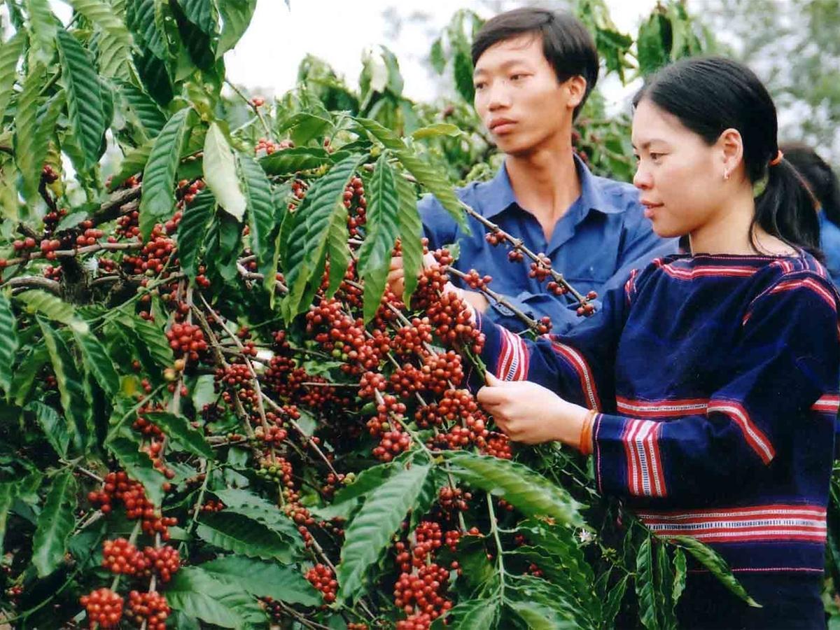Công ty TNHH thương mại và đầu tư Huy Hoàng - Chuyên phân